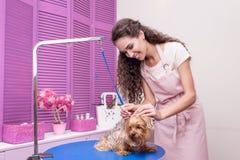 Ung kvinna i förkläde som ansar den förtjusande varvhunden i älsklings- salong Royaltyfria Foton