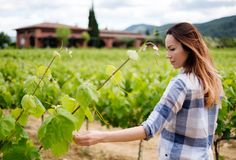 Ung kvinna i vingård arkivbild