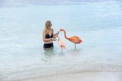 Ung kvinna med långt blont hår i den svarta bikinin som matar rosa flamingo på stranden arkivbilder