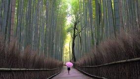 Ung kvinna med paraplyet som går till och med bambuskog stock video
