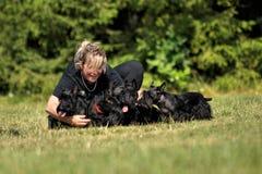 Ung kvinna med skotska terrier. Royaltyfria Foton