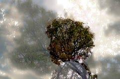 Ung kvinna och träd Arkivbild