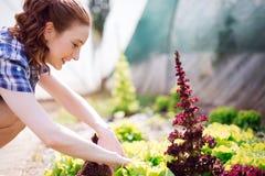 Ung kvinna som arbetar i ett växthus royaltyfria foton