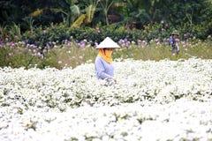 Ung kvinna som arbetar i hennes trädgård på Hanoi, Vietnam på December 02, 2016 Royaltyfri Fotografi