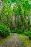 Ung kvinna som fotvandrar till och med skog i avståndet Arkivfoto