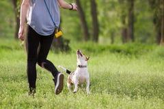 Ung kvinna som går med en hund som spelar utbildning Royaltyfria Foton