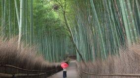 Ung kvinna som går till och med bambuskog stock video