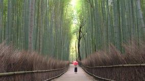 Ung kvinna som går till och med bambuskog arkivfilmer