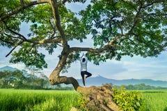 Ung kvinna som gör yogaövning på ett träd royaltyfria foton