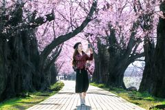 Ung kvinna som g?r i tr?dg?rd f?r k?rsb?rsr?d blomning p? en v?rdag Tr?d f?r k?rsb?rsr?d blomning f?r rad i Kyoto, Japan royaltyfri bild