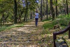 Ung kvinna som joggar i parkera, baksidasikt Royaltyfri Foto