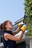 Ung kvinna som klipper en häck Royaltyfri Bild