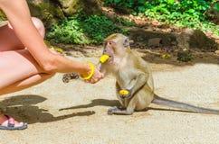 Ung kvinna som matar den lilla apan med bananen Arkivbild