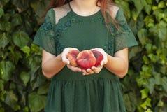 ung kvinna som rymmer några röda plana persikor i hennes händer Prunus Persica platycarpa Kinesisk plan persika Variationer: royaltyfri fotografi
