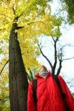Ung kvinna som ser upp till och med guld- träd Arkivfoto