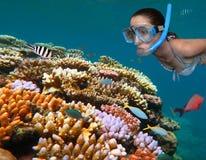 Ung kvinna som snorklar i den stora barriärrevet Queensland Aus Arkivfoto