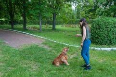 Ung kvinna som spelar med den engelska cockerspanieln utomhus Arkivfoton