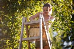 Ung kvinna upp på en stege royaltyfria foton