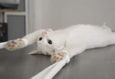 Ung kvinnlig Cat Neutering Operation Arkivfoto