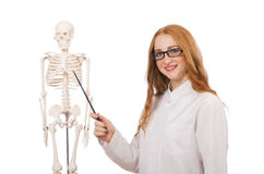 Ung kvinnlig doktor med skelettet som isoleras på Arkivfoton