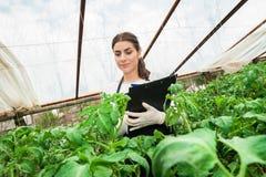 Ung kvinnlig åkerbruk tekniker som kontrollerar växten Fotografering för Bildbyråer