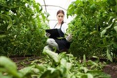 Ung kvinnlig åkerbruk tekniker som kontrollerar växter Fotografering för Bildbyråer