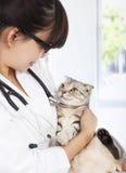 Ung kvinnlig veterinär som rymmer den sjuka katten på kliniken Arkivfoto