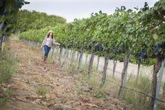 Ung kvinnlig vinhandlare Inspecting druvorna i vingård royaltyfria bilder