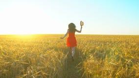 Ung latinamerikansk härlig kvinna för lycklig handelsresande som kör på vetefält i solnedgångsommar Vård- lyckaturism för frihet stock video