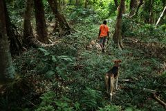 ung lokal tonåring för man för bystammedlem som går med hans hundkapplöpning till rainforestdjungeln för att jaga några fåglar me royaltyfria bilder