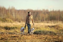 Ung lycklig europé som ler och skrattar att gå i ett fält med två hundkapplöpning royaltyfri foto
