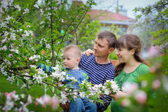Ung lycklig familj i vårträdgård för körsbärsröd blomning Arkivbilder