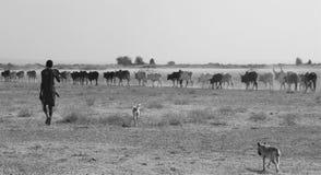 Ung Maasai herder Arkivbilder