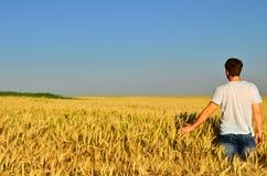 Ung man i ett kornfält Arkivbilder