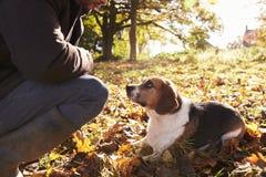Ung man som övar hunden i Autumn Woodland royaltyfria foton