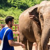 Ung man som att bry sig för en elefantfristad i djungeln av Chiang Mai royaltyfri foto