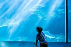 Ung man som ser fisken i en jätte- behållare Royaltyfri Fotografi