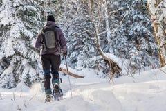 Ung man som snowshoeing i vinter, i Quebec den östliga församlingen Royaltyfri Foto