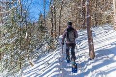 Ung man som snowshoeing i vinter, i Quebec den östliga församlingen Arkivbild
