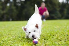 Ung man som spelar med hans hund i parkera Arkivfoto