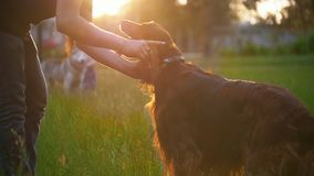 Ung man som spelar med hans irländska setter för hund på gräset på solnedgången stock video