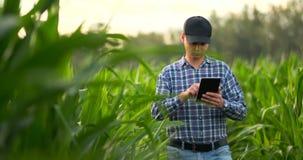 Ung manlig agronom eller jordbruks- tekniker observera den gröna risfältet med den digitala minnestavlan och pennan för agronomin stock video