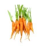 Ung morot på vit bakgrund nya frukt och grönsaker är Arkivfoton