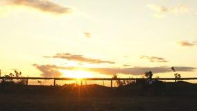 Ung nätt flicka som rider en häst på solnedgång lager videofilmer