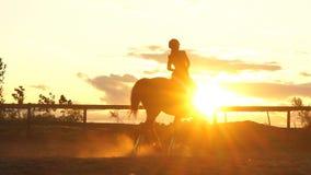 Ung nätt flicka som rider en häst på solnedgång stock video