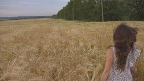 Ung nätt kvinna i klänningspring i fält Le flickan på guld- äng lager videofilmer