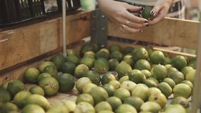 Ung och härlig kvinna i supermarket som köper nya och sunda limefrukter för familj Arm som väljer den smakliga citruns lager videofilmer