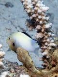 ung ogift kvinnafiskhumbug Royaltyfria Foton