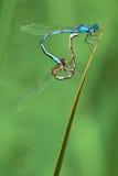 ung ogift kvinnaflugor Arkivfoto