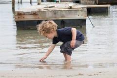 Ung pojke som söker för skal i hamn arkivbilder